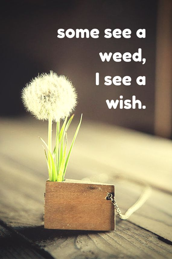 Some see a weed,I see a wish