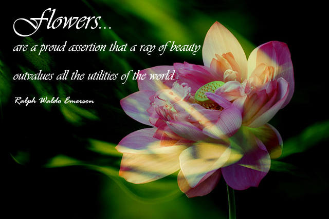 Flowers… are a proud assertion that a ray of beauty outvalues all the utilities of the world.