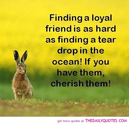 Finding a loyal friends is as hard as finding a tear drop in the ocean! if you have them, cherish them